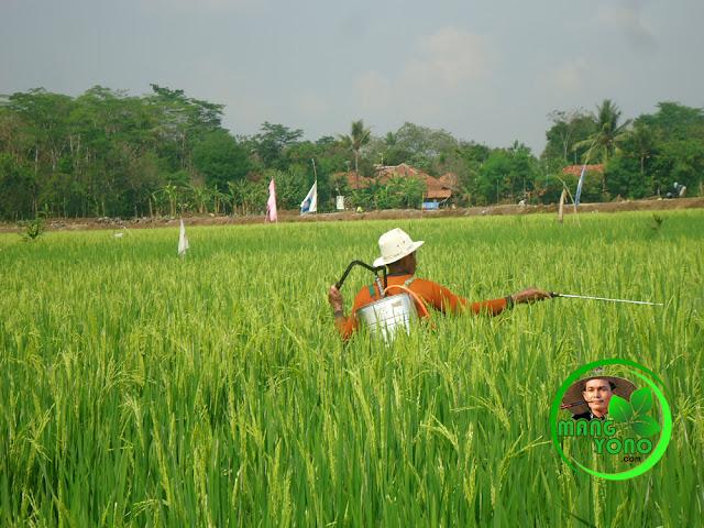 Pestisida untuk penyemprotan tanaman padi