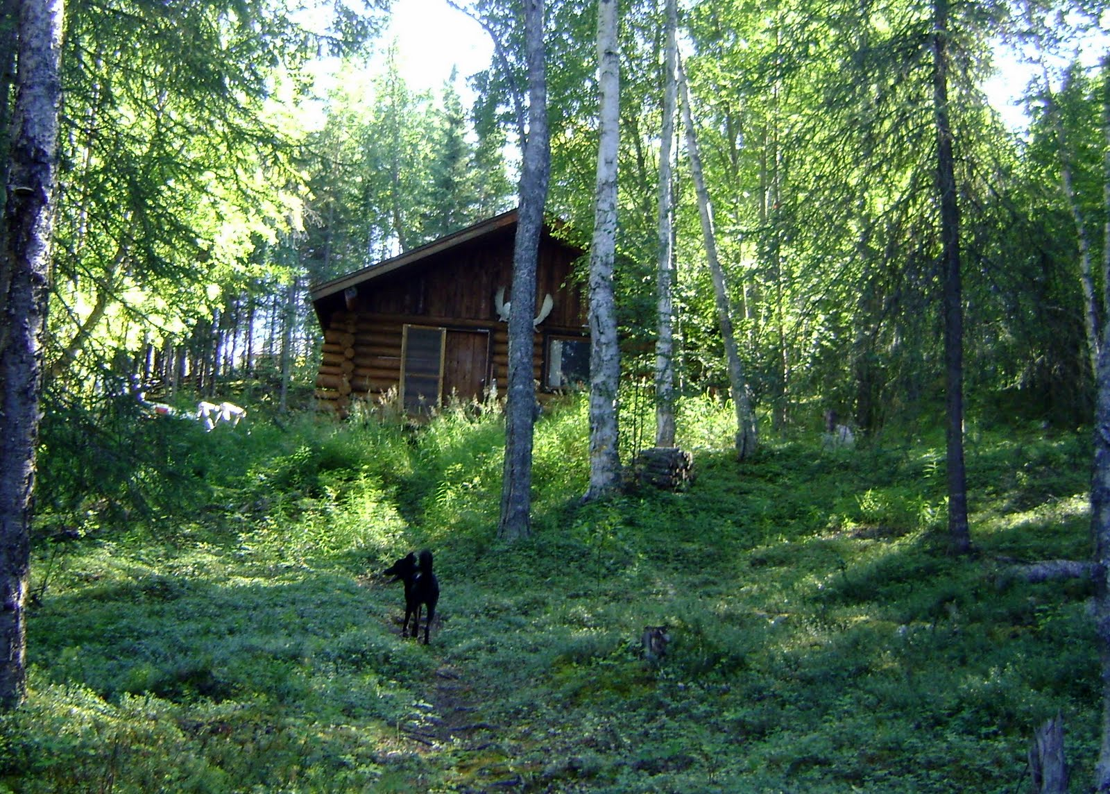 Homesteading in alaska home sweet home for How to get a homestead in alaska