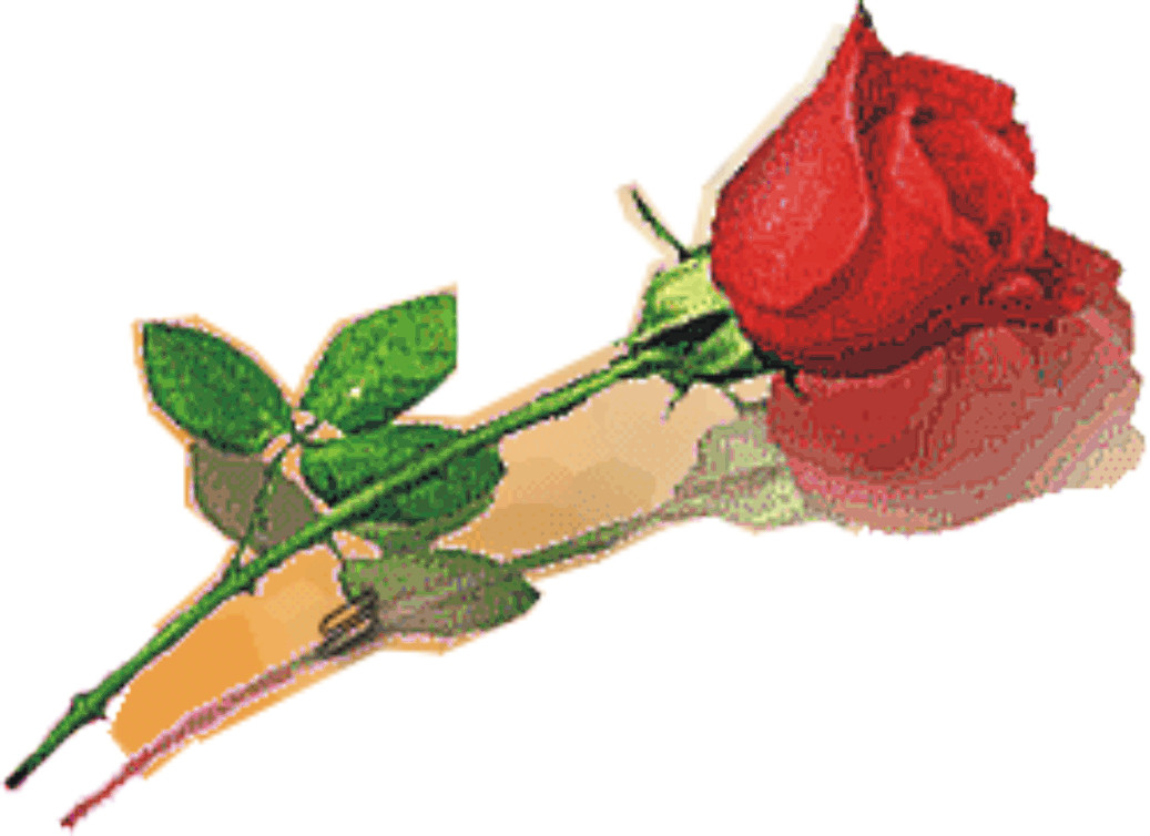 ... atau sebuket bunga berisi beberapa jenis mawar berwarna berbeda