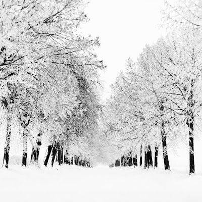 Snowy lane download free wallpapers for Apple iPad
