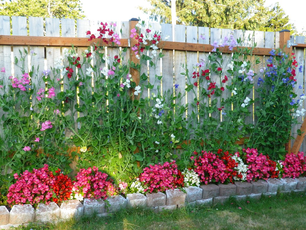 Sherm363 30 july coos bay for Easy care flowers for garden