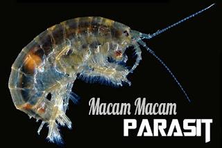 Pengertian dan Macam-macam Parasit