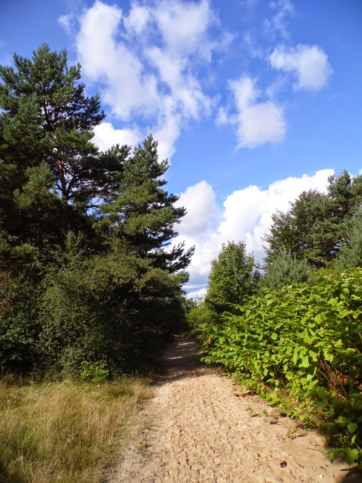 Droga za Strondowym Jarem - w kierunku Ostrowa