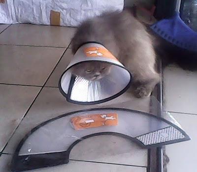Collar Kucing Hewan Segitu Petshop