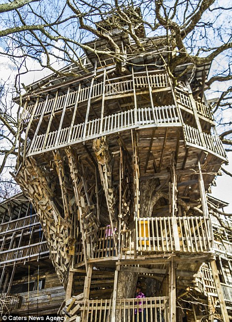 My search for a home the world 39 s tallest treehouses - Biggest treehouse in the world ...