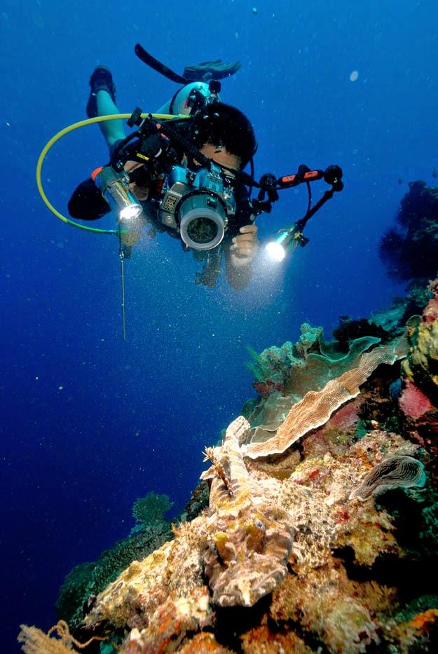 Wisata bawah laut Kepulauan Derawan