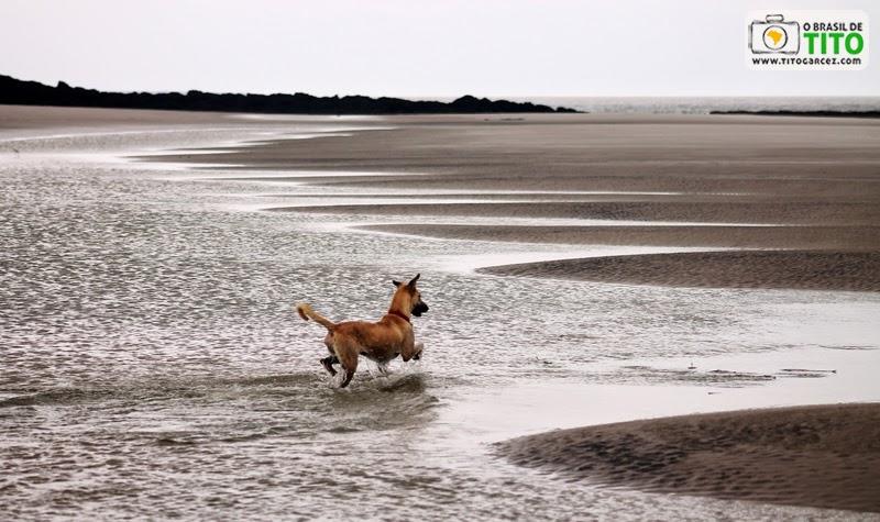 Cachorro brinca nas lagoas que surgem na maré baixa na praia da Princesa, na Ilha de Maiandeua (Algodoal)