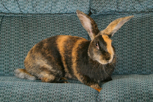 Arnabkus Rabbit Abc Glossary B