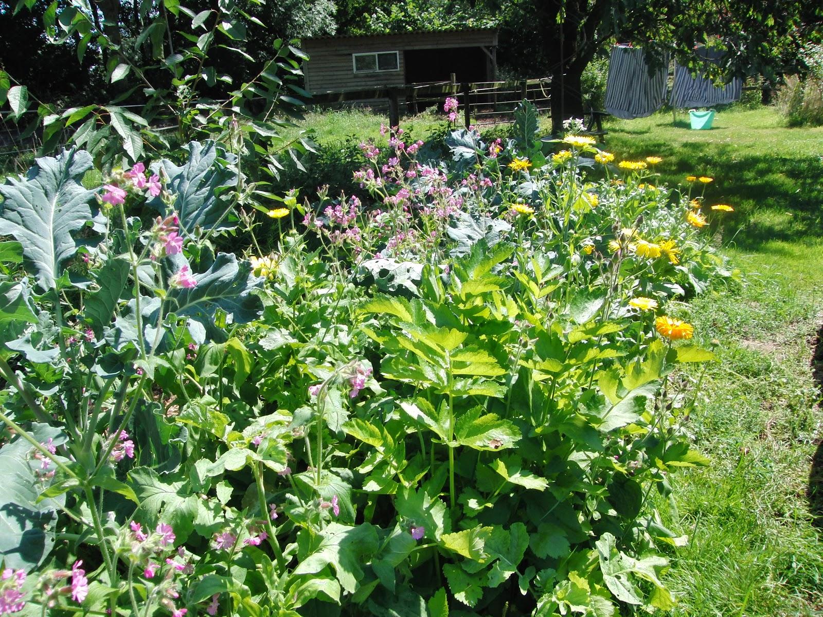 permacultuur, ecologisch evenwicht, no dig garden, Beeldend Buitenleven, Paula Hondsmerk