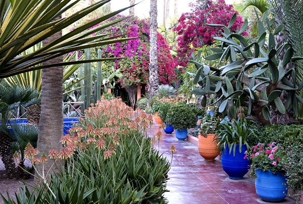 pinkpagodastudio moroccan majorelle blue jardin majorelle in marrakesh. Black Bedroom Furniture Sets. Home Design Ideas