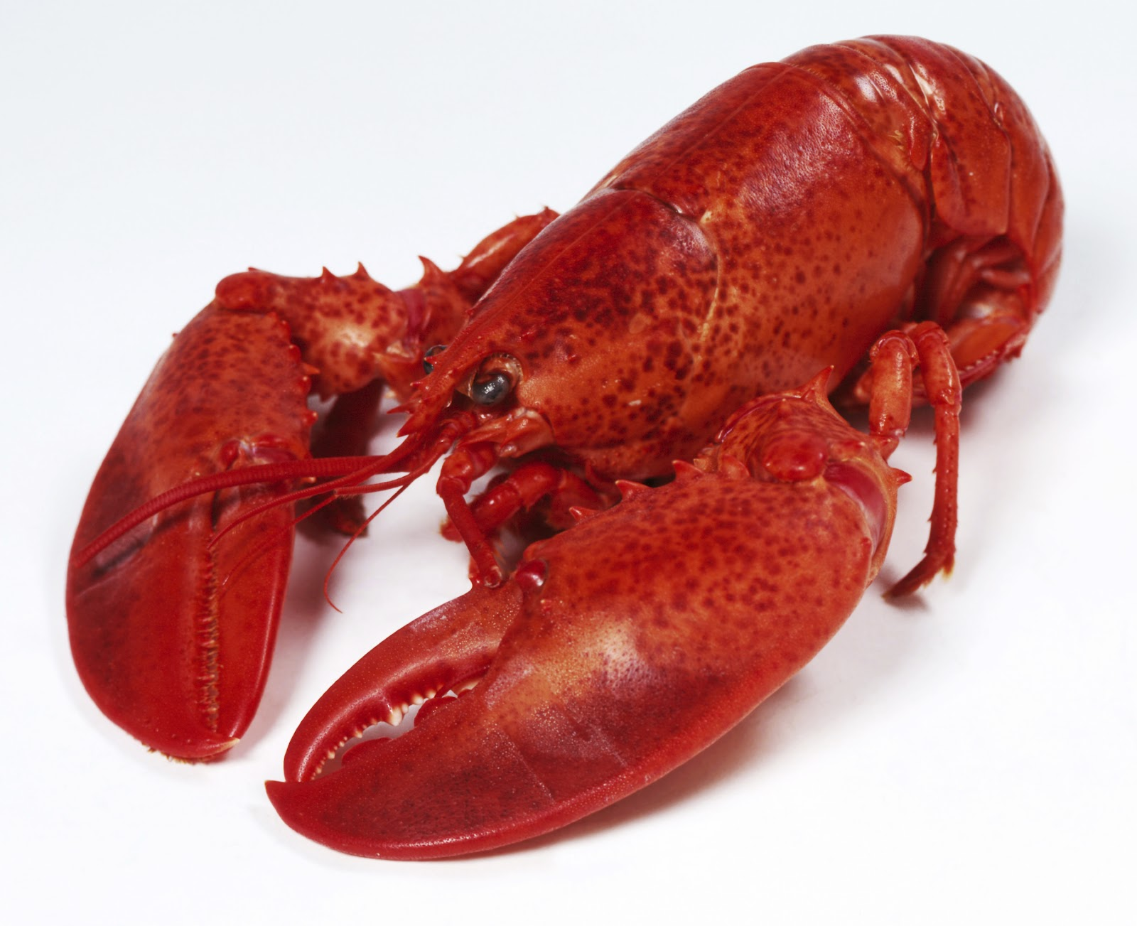 Deliciously Gluten Free: Lobster is Gluten Free