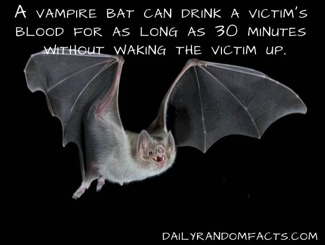 animal facts, facts about animals, interesting animal facts, vampire bats fact