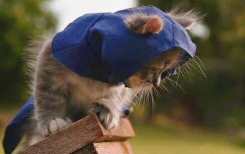 assassin's creed unity kitten