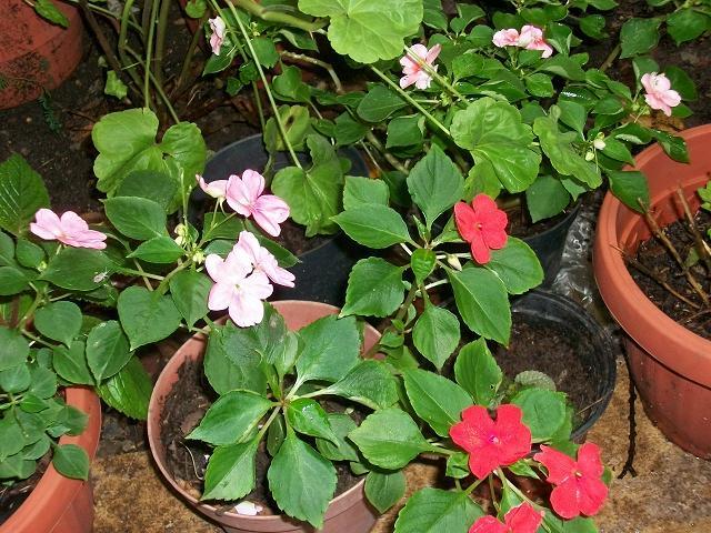 Cuidar la naturaleza es nuestro hobbie viveros escolares for Todas las plantas son ornamentales
