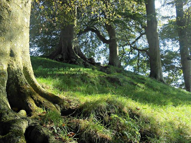 Avebury Stone Circle Tree Grove