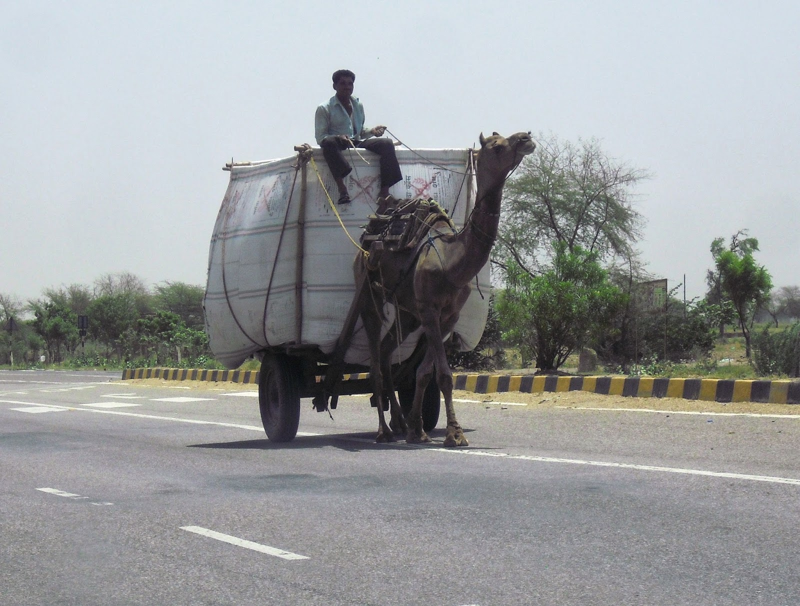 India Camel Transportation