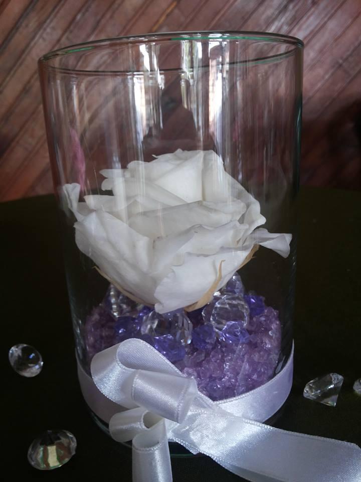 Rosas Naturales Preservadas Blancas ¡Duran 4 Años!