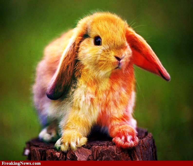 'OZ' - The 'Other' Side of the Rainbow: The Real Easter Bunny