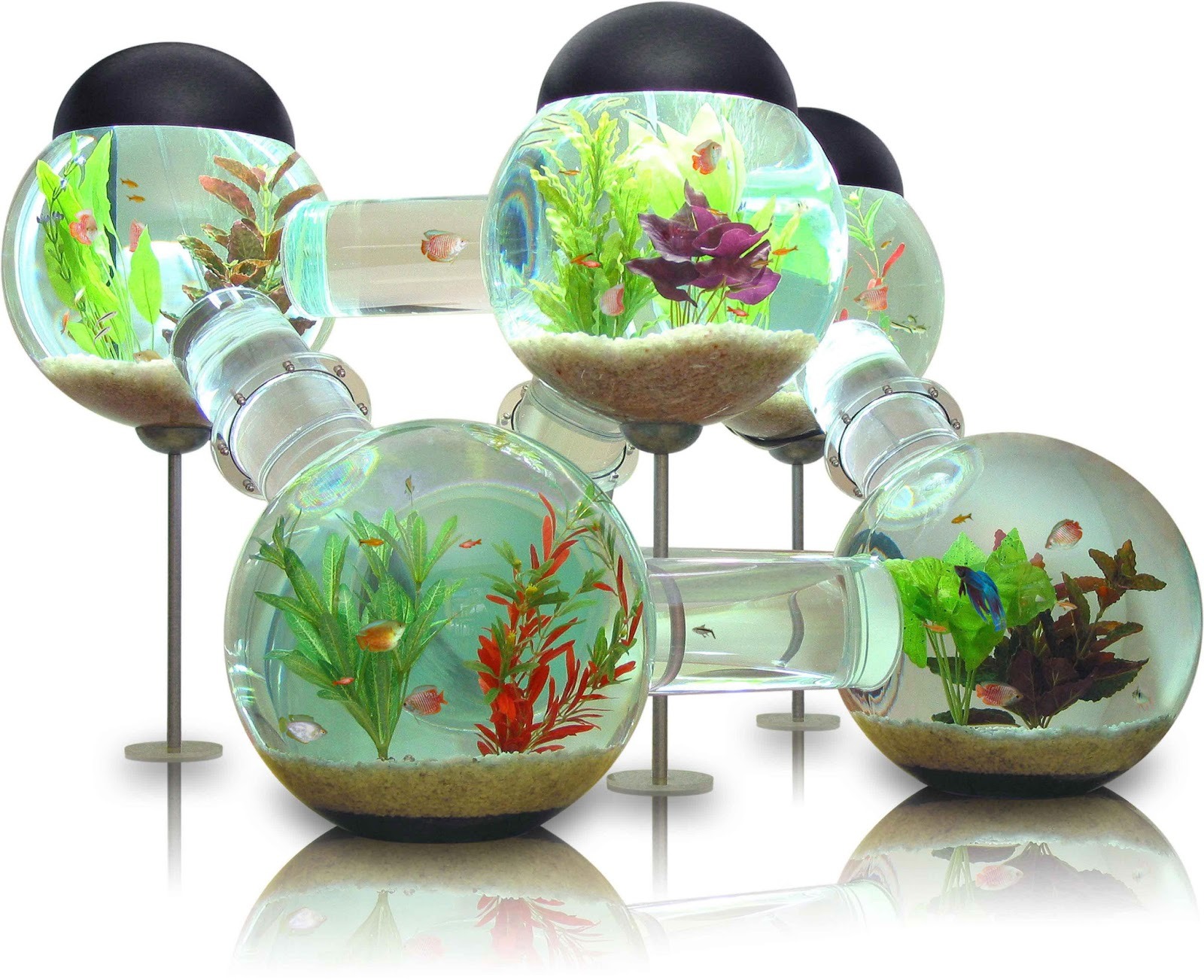 Freshwater tropical fish tank pictures