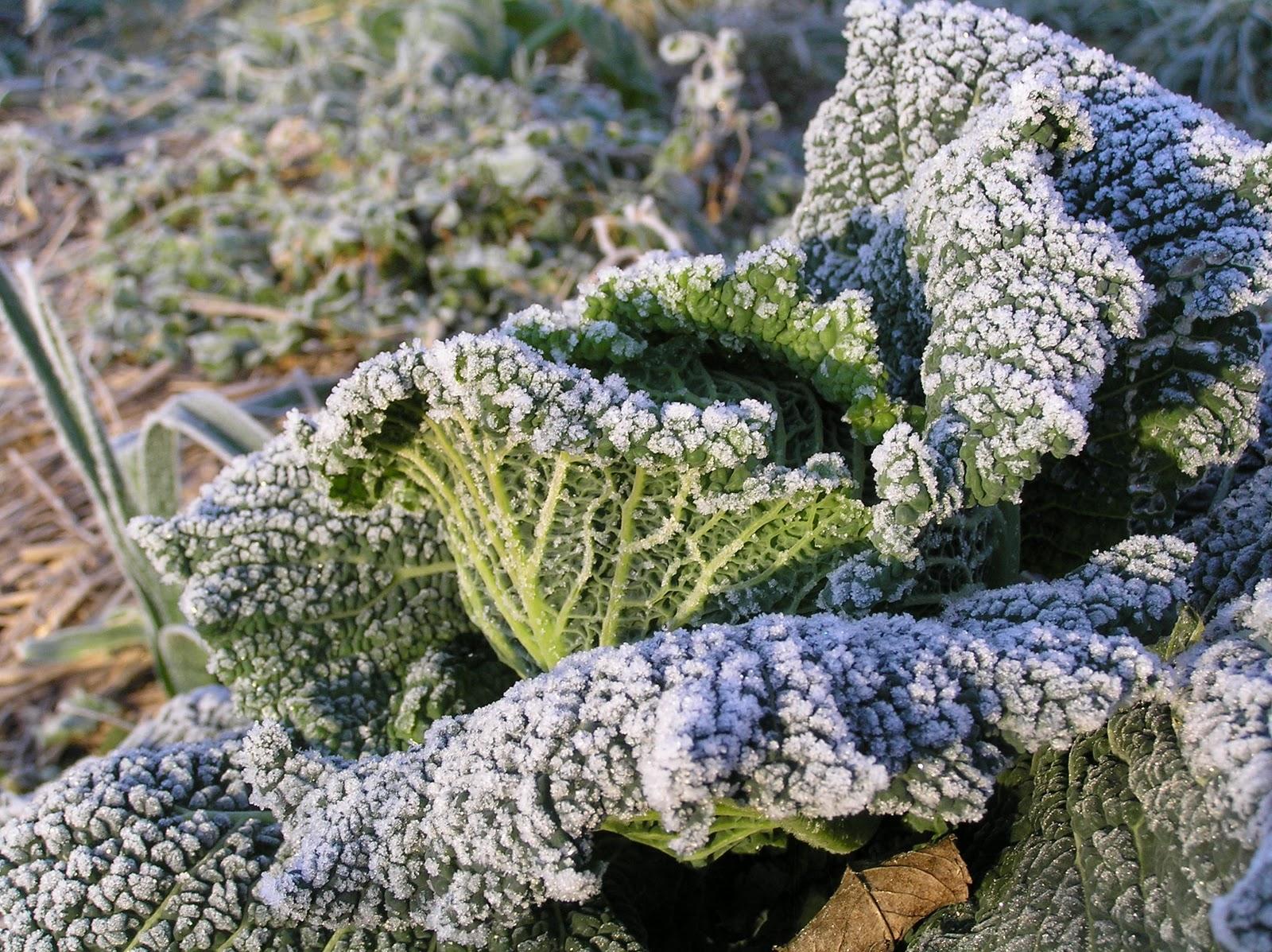 Vivre pratique la campagne pr parer son jardin pour l 39 hiver for Preparer son potager pour l hiver