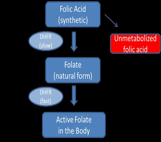 Does Your Body Naturally Produce Folic Acid
