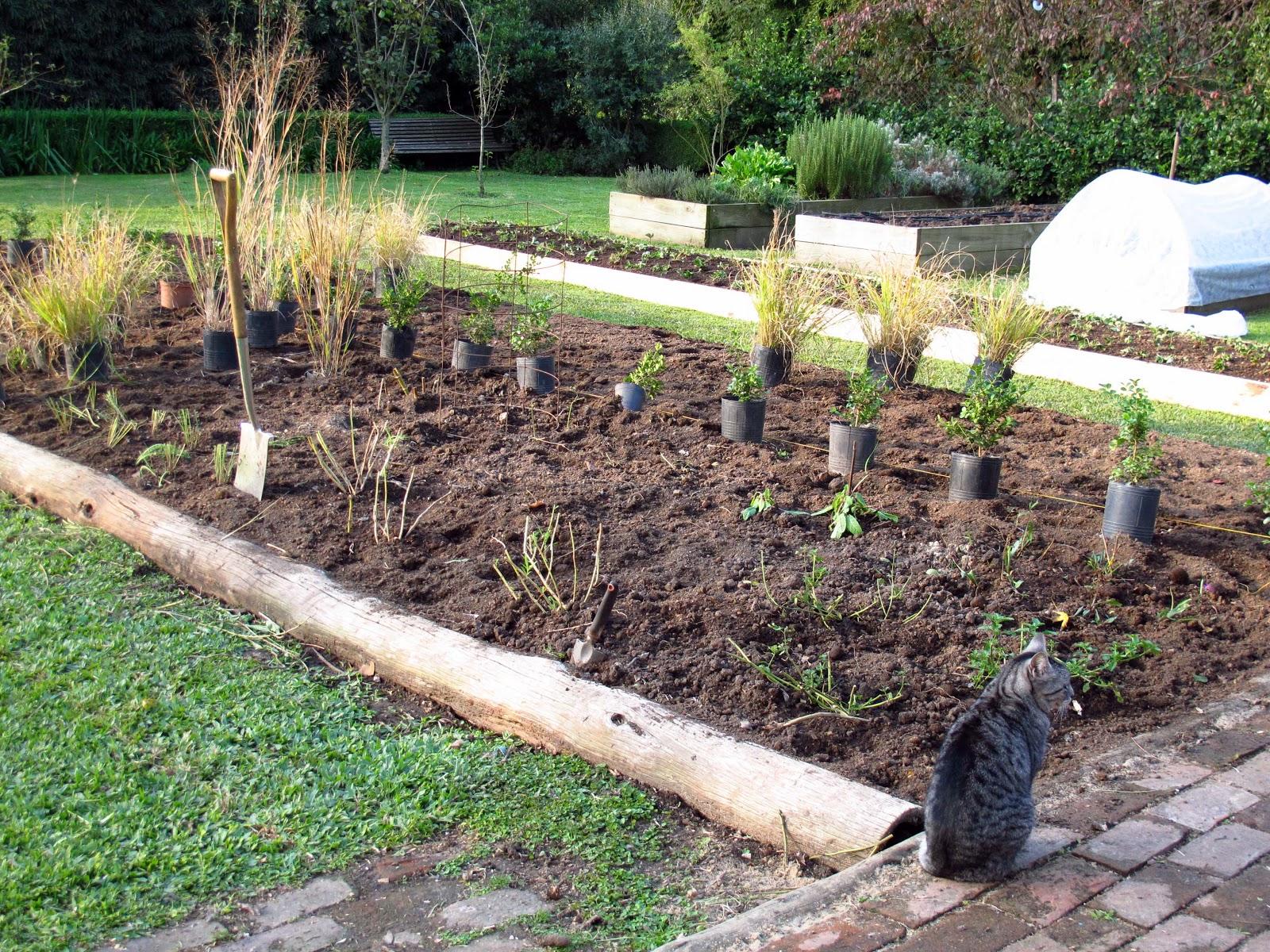 En el jardin nuevo cantero en construcci n for Canteros con piedras y plantas
