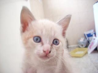 fotos+gattitos+gratis