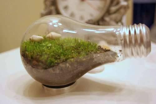mini jardim terrario : mini jardim terrario:mini jardim. Terrários = jardim em vidro fechado