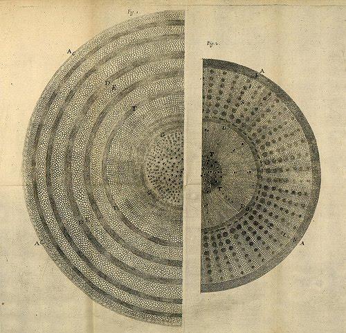 nehemiah grew trunk - Behind the Design: Earth Layers