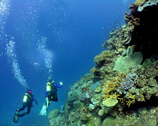 http://3.bp.blogspot.com/-jzKwQ63m1Is/T9W26trdrXI/AAAAAAAAB6A/gVNH6y3YPJE/s320/australia-scuba-diving.jpg