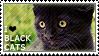 Apaixonada por Gatos Pretos