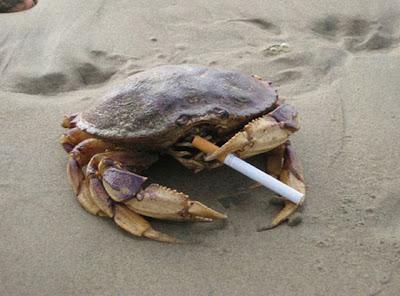 Funny Animal Smoking