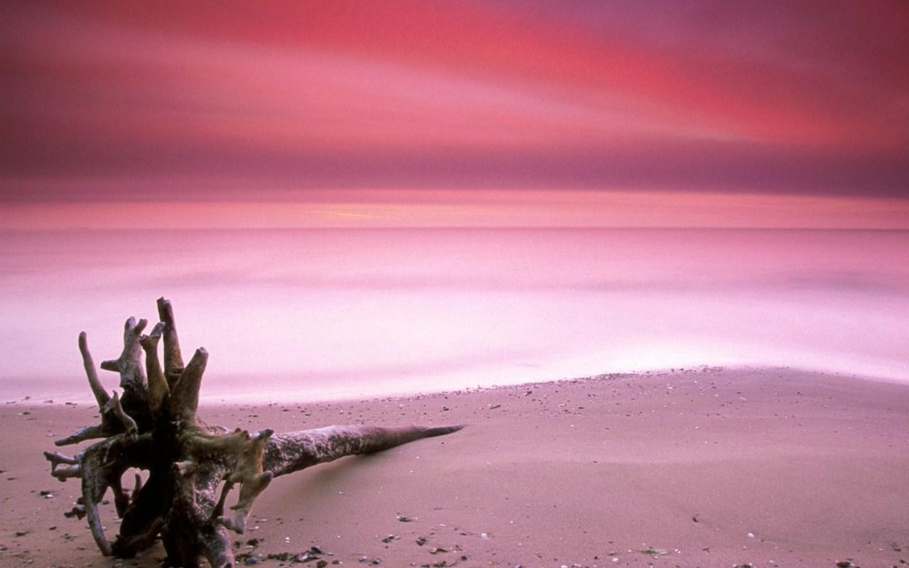 No viviendo en un mundo vivo: Pink Sands Beach: noviviendoenmundovivo.blogspot.com/2012/11/pink-sands-beach.html