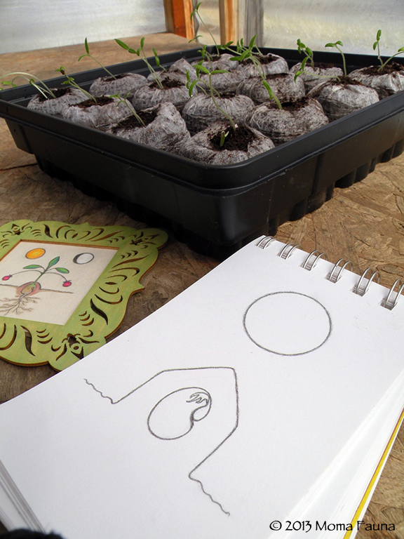 Cultivating Moon sigil, Greenhouse talisman  & tomato seedlings in the greenhouse.