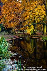 Park Oliwski -  jesień