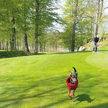 Jag hämtar golfbollen, Husse ...