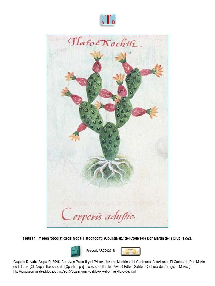 Nopal (Opuntia sp.)