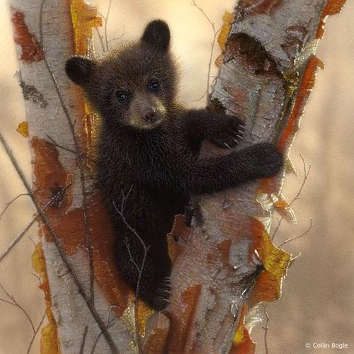 15-Black-Bear-Cubs-1-Collin-Bogle-Animal-Wildlife-in-Art-www-designstack-co