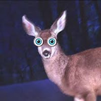 The deer-in-the-headlights-look happens to everyone
