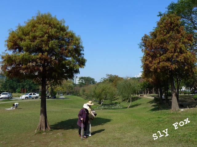 巴克禮公園落羽松