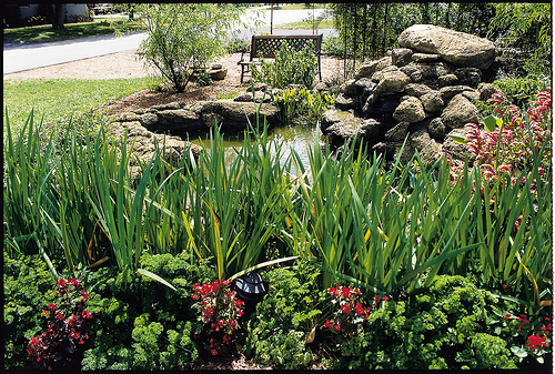 Guernsey soil water conservation district conservation for Typical landscaping plants