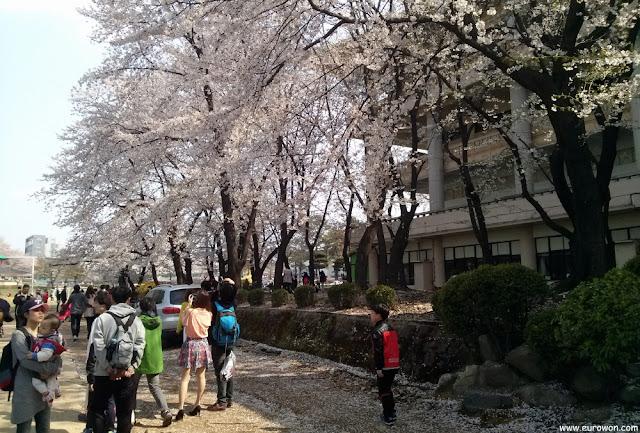 Flores de cerezo en el Gran Parque de los Niños de Seúl