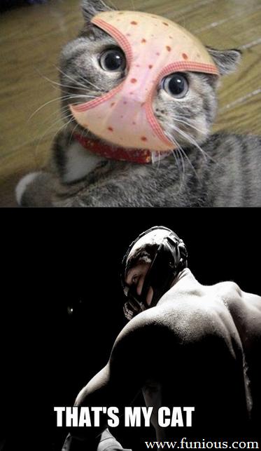 Banes Cat