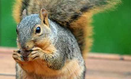 The Squirrel - How To Keep Your Heart Open When You Lose A Pet ??!!
