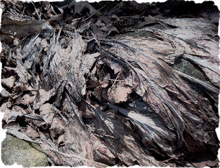 crinkled dried dead hosta
