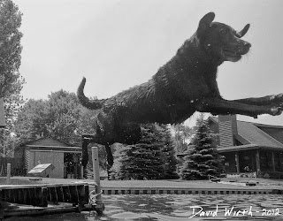 dog jump dock water lake lab