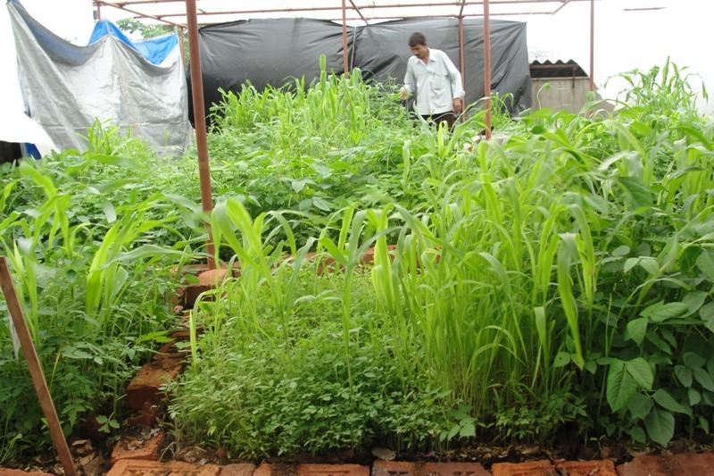 Urban Leaves India: Grey becomes Green... Vipul's terrace ...