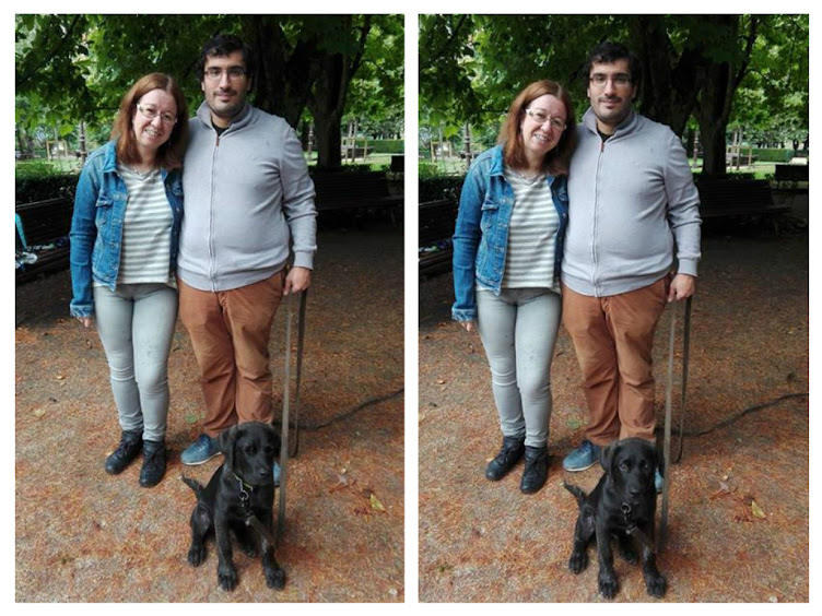 Cachorrote de cruce mastin y labrador, Básico y calma, 4 meses.