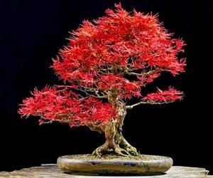 """<img src=""""bonsai23.jpg"""" alt=""""foto bonsai"""">"""