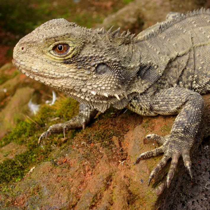 Pairi Daiza - reptile - http://spicerabbits.blogspot.fr/